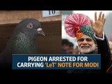 Pigeon arrested for carrying 'Lashkar-e-Taiba' note for Prime Minister Narendra Modi