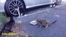 Une maman chat protège son petit d'autres chats