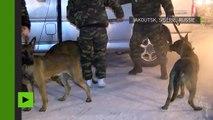 Trois clones du meilleur berger malinois de Corée du Sud offerts à la Russie