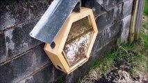 Grâce à cette entreprise, il est possible d'avoir des ruches d'abeilles dans sa maison !