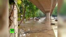 Géorgie : un hippopotame s'est retrouvé dans les rues de Tbilissi à cause des inondations