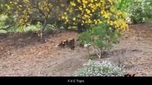 Anaconda Vs Jaguar, Crocodile, Giraffe, Lion   Fight Till Death - Amazing Wild Animal Attacks #7