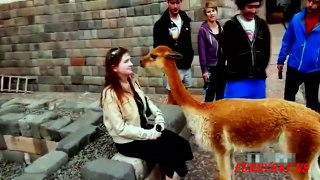 AMAZING Animals attack people