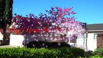 Spring Has Sprung - San Jose , California