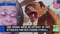 Tuée par des pitbulls : une grand-mère se fait attaquer par des chiens pitbull