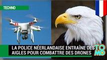 Aigles vs drones : la police néerlandaise entraîne des aigles pour combattre des drones