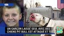 Chiens dangereux : un Californien de neuf ans est attaqué par trois chiens pit bull
