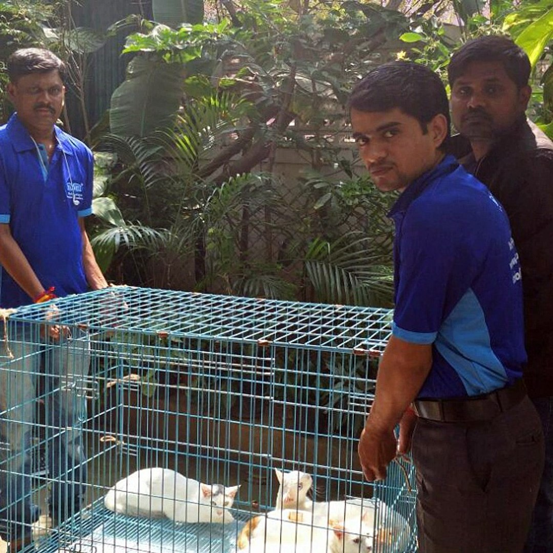 Pet relocation Services | Pet Shifting | Pet Movers