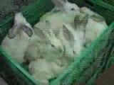 horreur sur les foestus et sur les lapin