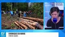 Pologne : la plus vieille forêt primaire d'Europe menacée