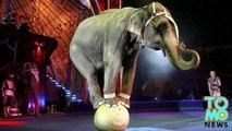 Un éléphant s'échappe d'un cirque et tue un homme.