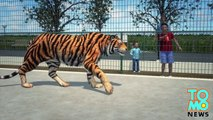 PÈRE DE L'ANNÉE: Un père laisse son fils se faire dévorer le bras par un tigre.