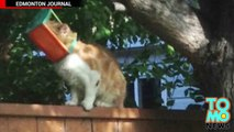 Un homme refuse de venir en aide à un chat errant piégé dans une mangeoire
