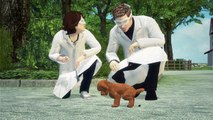 Les chiens font leurs commissions selon les champs magnétiques de la terre
