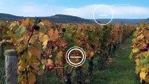 FUN-MOOC : OWU2 - Université de la Vigne et du Vin pour Tous 2