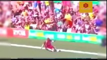 Best Cricket Catches - Insane Catches In Cricket History - Amazing Acrobatic Catches