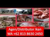 PROMO!! WA +62 813 8630 2450 Tetelan Ikan Tuna di Jakarta