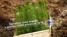Comme promis, Carrefour replante 30 000 arbres dans la Forêt des Landes !