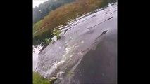 Un crocodile affamé vient piquer le poisson de ce pecheur... Terrifiant