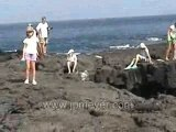 Galapagos Islands travel: Lava sea shore. Fur seals.