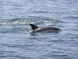 Tout savoir sur les mammifères marins
