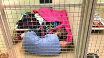 Funcionária de um abrigo deita dentro de canil para acalmar cão abandonado