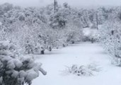 Snow Blankets California Orchard