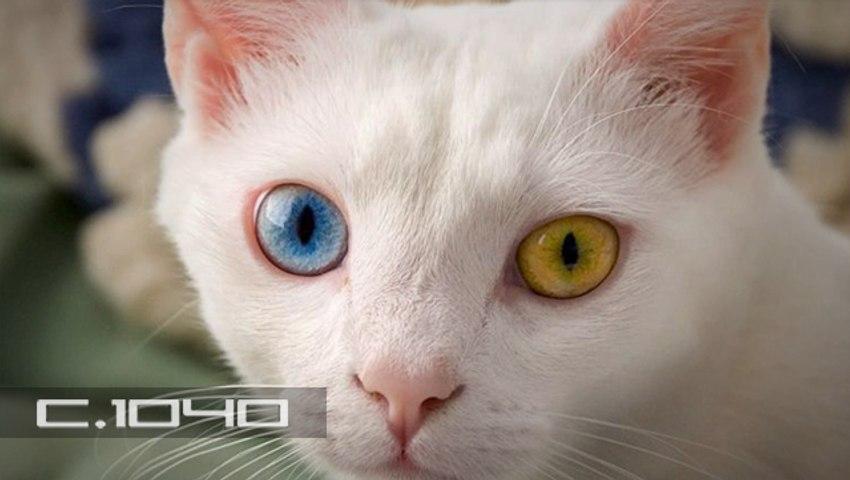 ¿Son los gatos espías enviados por extraterrestres?
