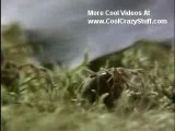 Crazy Spiders On Cool Drugs