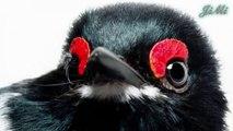 Loài chim nhỏ với đôi mắt kỳ lạ