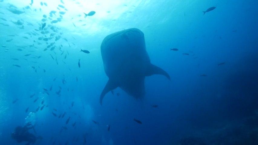 Forscher entschlüsseln Geheimnis des Walhais