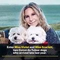 La chanteuse américaine Barbra Streisand a fait cloner son chien pour en créer... deux autres