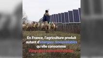 20% des énergies renouvelables nationales sont issues de l'agriculture