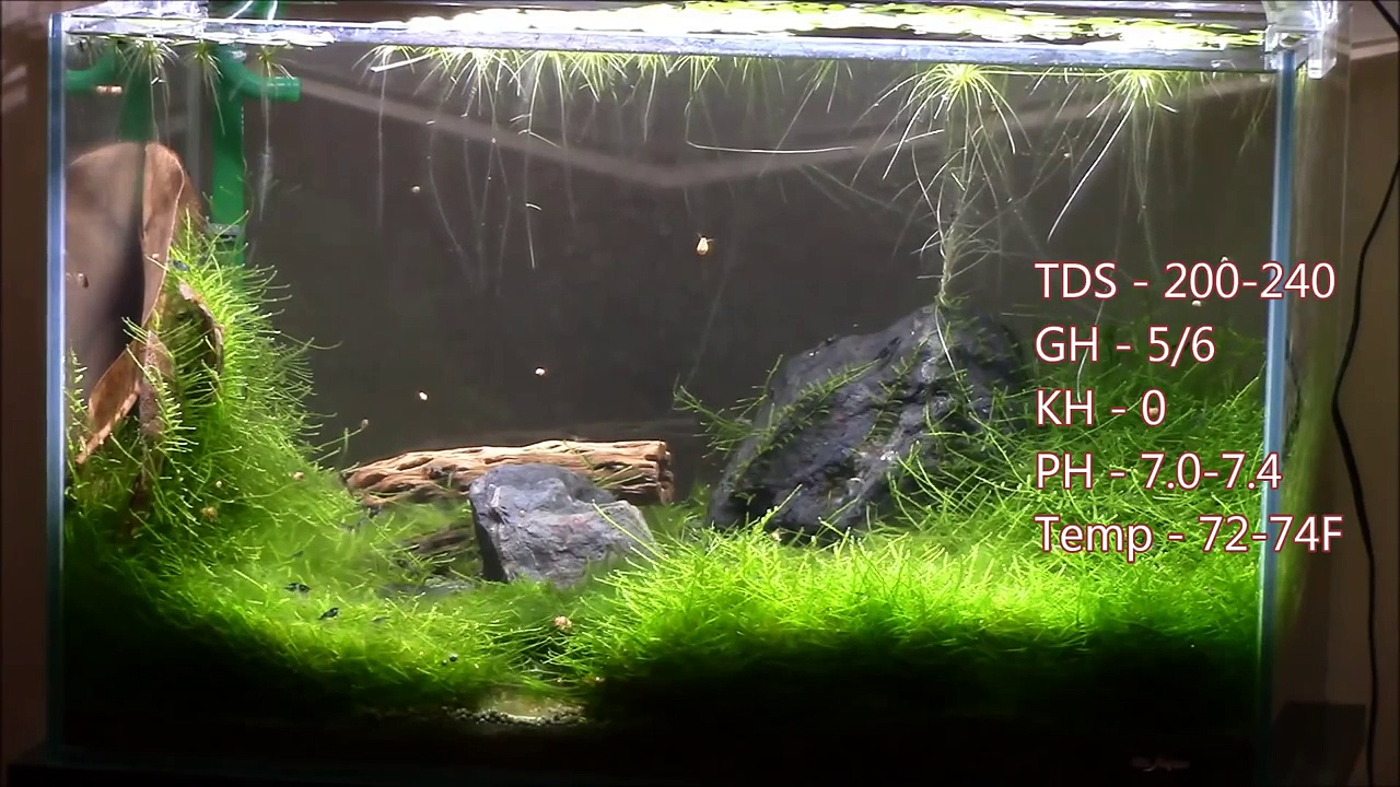How to Keep and Breed Shrimp – Plant and Fill