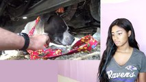 Try Not To Cry: Pit Bull with bleeding tumors surrenders to rescuer and gives him a kiss - Reion