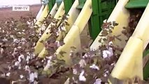 GLOBAL 3000 | Cotton Crisis -- Greece and Global Competition