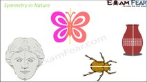 Maths Symmetry part 3 (Symmetry in Nature) CBSE Class 6 Mathematics VI