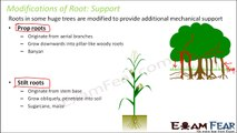 Biology Getting to Know Plants Part 16 (Root modification: support, photosynthesis) Class 6 VI