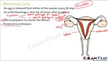 Biology Adolescence Part 8 (Menstrual Cycle in Females) Class 8  VIII