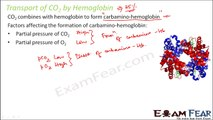 Biology Breathing & Exchange of Gases part 14 (Transport of carbon dioxide gas) CBSE class 11 XI