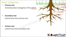 Biology Morphology of Flowering Plants part 2 (Root : Categories & Function) CBSE class 11 XI