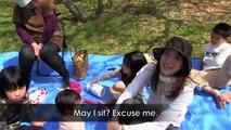 Hanami - Sakura - Cherry Blossoms - 花見 - My Life in Japan - 1 - English Lesson on Japanese Culture
