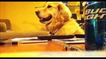 Quand ton chien et tellement fan de guitare qu'il déteste quand tu arretes de jouer