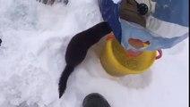 Ce petit vison vient demander un poisson à un pecheur... pas très sauvage l'animal