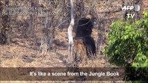 rumble in the jungle book video