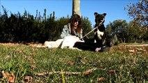 Mulher acolhe cão de rua para morrer em paz, mas algo incrível acontece e muda o rumo da história