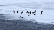 New Supercolony Of Penguins Discovered Near South Pole
