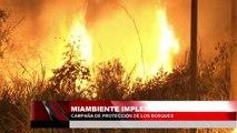 Miambiente implementara campaña de proteccion de los bosques