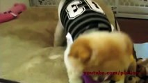 Cute/Funny Kitten/Cats And Puppies/Dogs Compilation new EPIC - 10 Minutes! [HD]