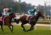 La carrière du cheval de course
